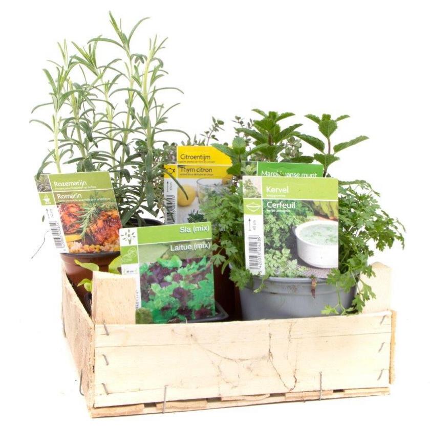 Graits plantenkweekbak met eetbare kruiden
